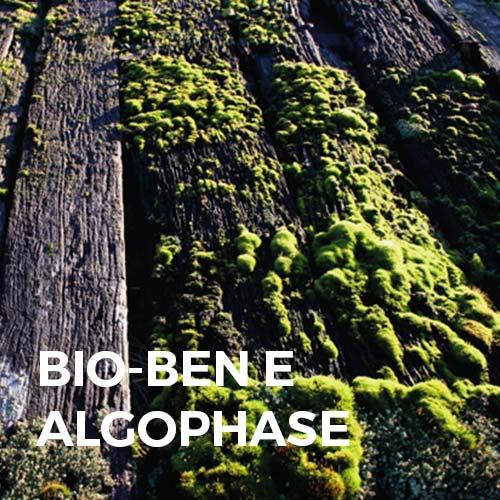 Phase Italia - Soluzioni per il restauro - Trattamento del legno in cattivo stato di conservazione - Trattamento con Bio Ben e Algophase