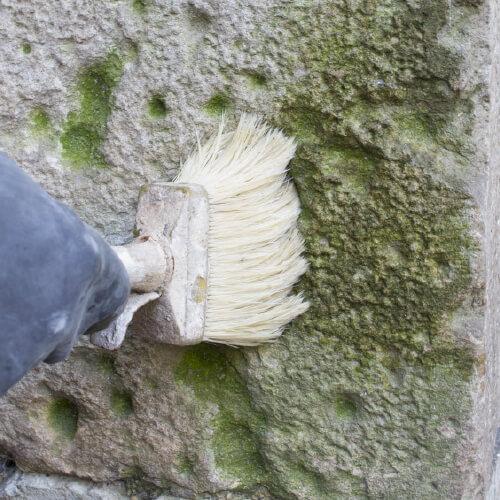 Phase Italia - Restauro Lapideo - Disinfezione e Protezione - Esempio trattamento patine biologiche su pietra naturale - applicazione Bio-Ben Phase a pennello